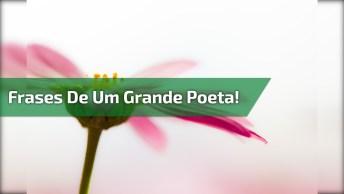 Vídeo Muito Legal Com As Melhores Frases De Mario Quintana, Um Grande Poeta!