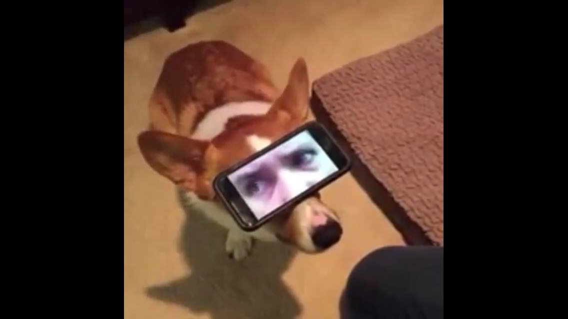 Vídeo muito legal, veja este cachorro com olhos humanos