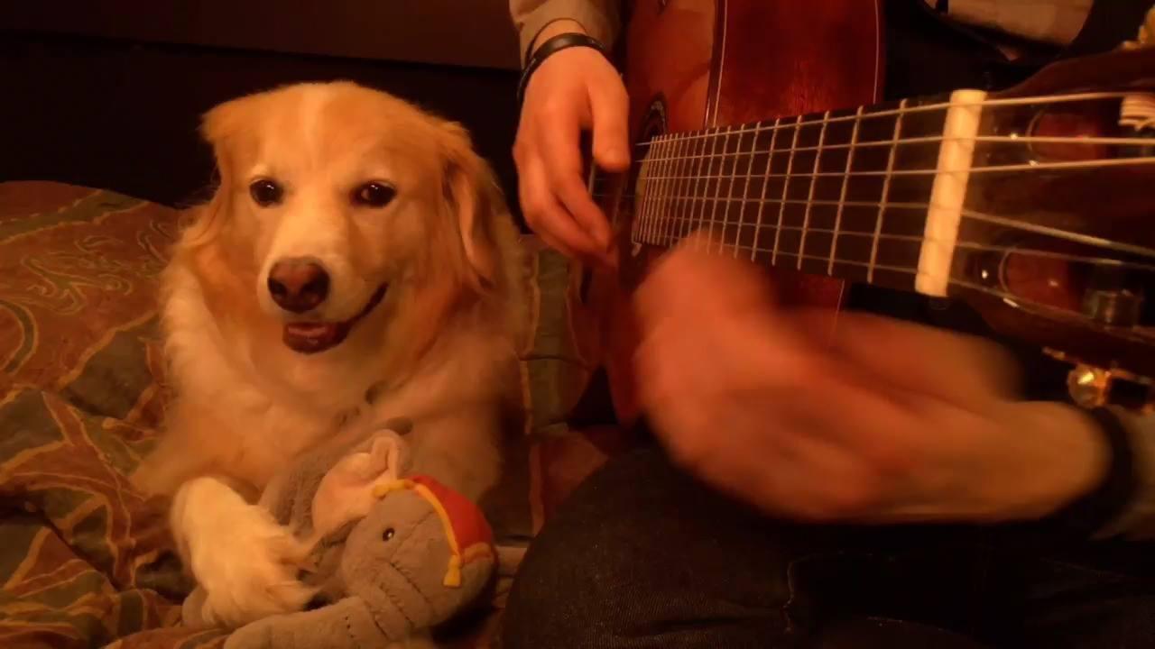 Cachorrinho que adora ouvir musica
