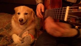 Cachorrinho Que Adora Ouvir Música, Por Música Todo Mundo Gosta!