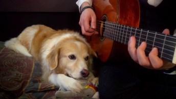 Cachorro Ouvindo A Música Tema Do Filme A Bela E A Fera, Lindo!