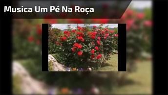 Musica Linda Para Homenagear Quem Tem 'Um Pé Na Roça'! Feita Por Ivan Souza!
