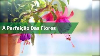 A Natureza É Bela Demais! Veja As Lindas Flores Que Embelezam O Mundo!