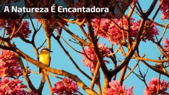 A Natureza É Encantadora! Veja Só Estas Imagens Dos Mais Lindos Passarinhos!