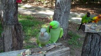 A Natureza É Magnifica! Veja Este Recanto Dos Pássaros, Vale A Pena Apreciar!