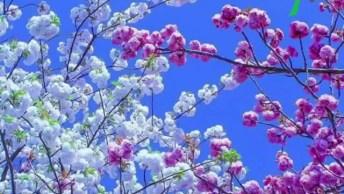 A Natureza É Maravilhosa! Veja Só Etas Imagens Elas São Surreais!