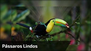 A Natureza E Seus Belos Pássaros! Não Tem Como Escolher Apenas Um!