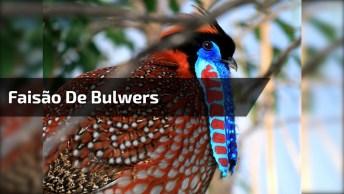 Alguém Sabe Que Pássaro É Esse? A Natureza Colaborou Com Suas Cores!