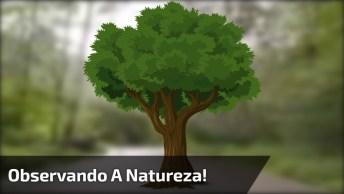 Andando De Carro E Observando A Natureza, Um Lugar Com Muito Verde!