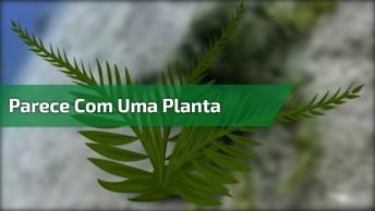 Animal Marinho Que Se Parece Com Uma Planta, Um Mistério Da Natureza!