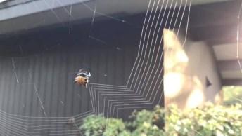 Aranha Construindo Sua Teia, Como A Natureza É Fantástica!