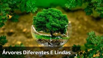 Árvores Belíssimas Diferentes De Tudo Que Você Já Viu, Confira!