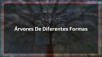 Árvores E Suas Diferentes Formas, Uma Mais Linda E Exótica Que A Outra!