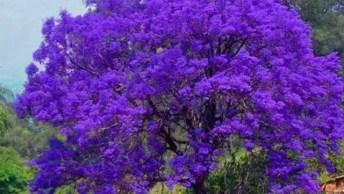 As Mais Belas Arvores Do Mundo, Como A Natureza É Bela, É Fantastica!