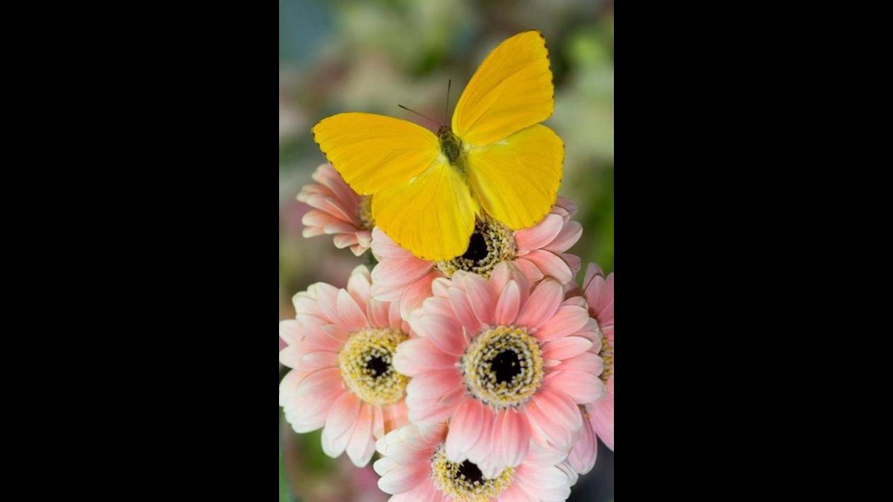 As mais belas borboletas, como a natureza é bela