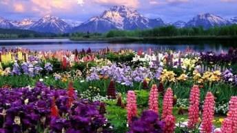 As Mais Belas E Coloridas Flores Da Nossa Magnifica Natureza! Lindo Demais!