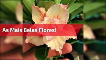 As Mais Belas Flores, Como Nossa Natureza É Bela, Como Deus É Perfeito!