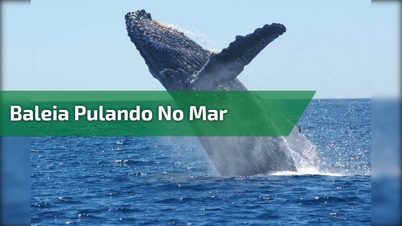 Baleia pulando no mar