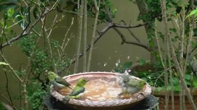 Bebedouro Para Pássaros, Uma Forma Linda De Ajudar Estes Pequenos A Viverem!