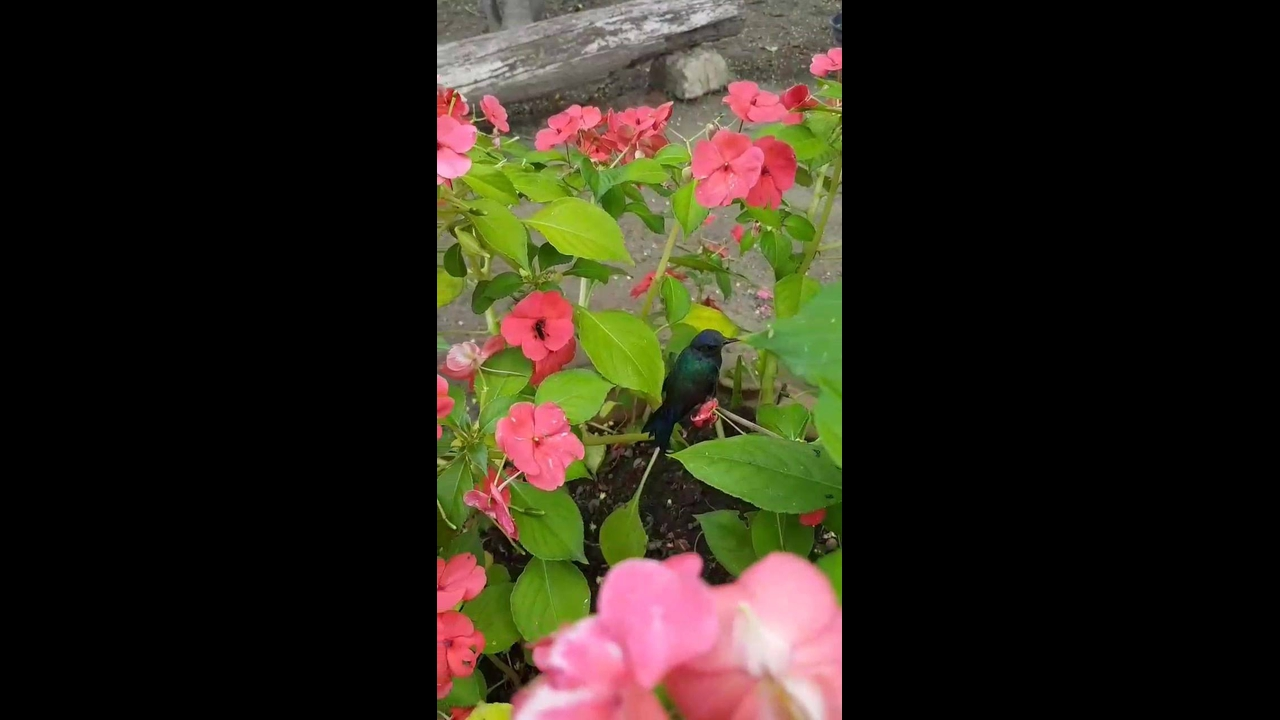 Beija-flor sentado em um galho de uma flor