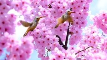 Beija-Flores Em Flores Rosas, A Primavera Esta Chegando, Que Lindo!