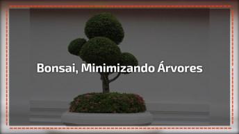 Bonsai Uma Linda Técnica De Minimizar Arvores, Como São Lindos!