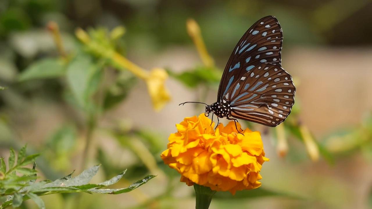 Borboleta de flor bem de perto para você apreciar