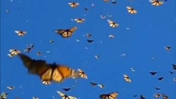 Borboletas Voando Pelo Céu, Veja Que Coisa Mais Linda De Vídeo!