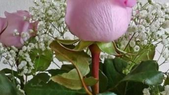 Botão De Rosas Cor De Rosa, Como É Lindas E Delicadas Esta Flor!
