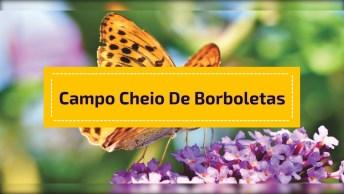 Campo Cheio De Borboletas, A Natureza É Espetacular, Confira!