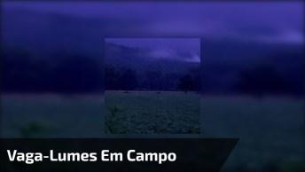 Campo Cheio De Vaga-Lumes, Como A Natureza É Fantástica, Confira!