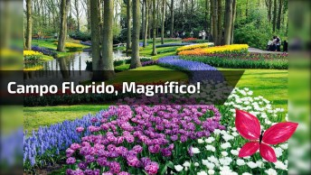 Campo Florido, Como A Natureza Á Maravilhosa, Simplesmente Apaixonante!