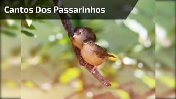 Cantos Dos Passarinhos, Um Dos Melhores Sons Da Natureza!