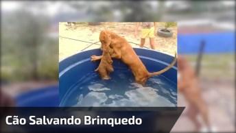 Cãozinho Persistente! Veja Só O Que Ele Faz Para Tirar O Ursinho D'Água!