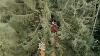 Casa Na Árvore Para Quem Amam Viver Entre A Natureza, Veja Que Lindo!