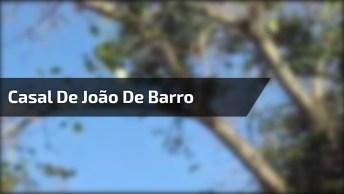 Casal De João De Barro Fazendo Sua Morada, Que Técnica Incrível!
