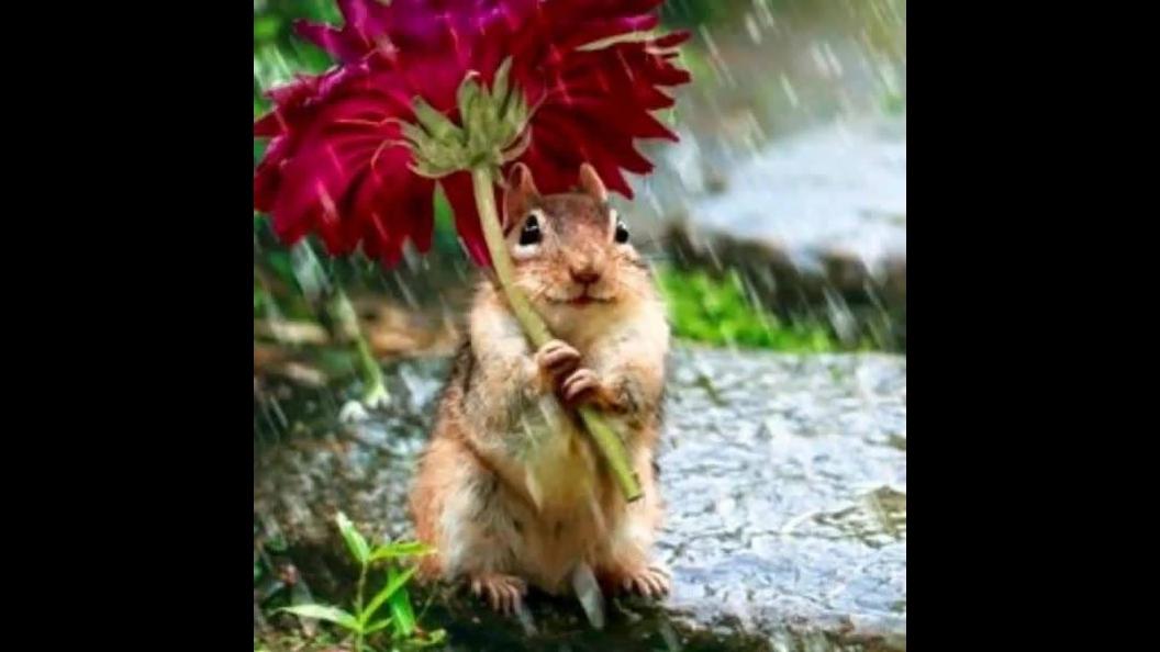 Como a natureza é bela! Veja só estas imagens maravilhosas