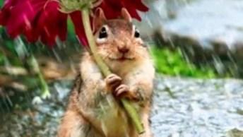 Como A Natureza É Bela! Veja Só Estas Imagens Maravilhosas, Incríveis!
