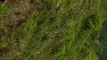 Contemplando A Natureza Nas Alturas, Teria Coragem De Subir Ai?