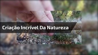 Criação Incrível Da Natureza, Alguém Sabe Como Se Chama Isso?