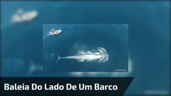 Drone Flagra Momento Em Que Uma Enorme Baleia Nada Ao Lado De Um Barco!