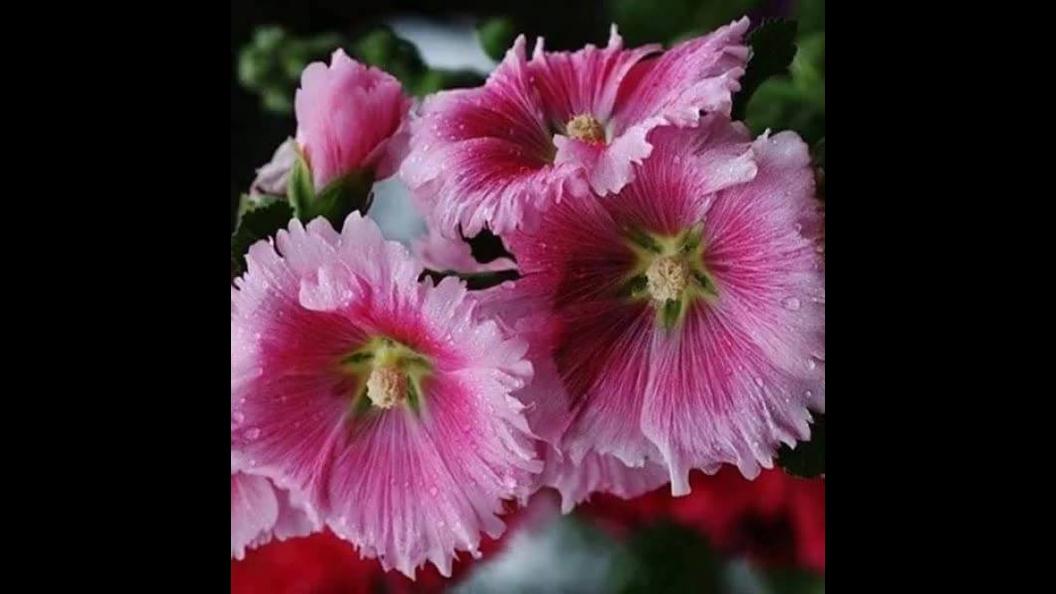 Este vídeo é especial para todos que apreciam as flores em sua natureza