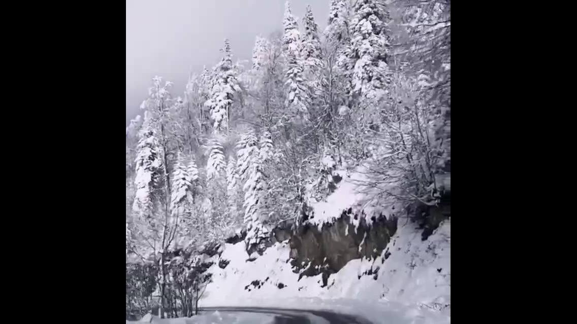 Estrada com montanhas e arvores cobertas de neve