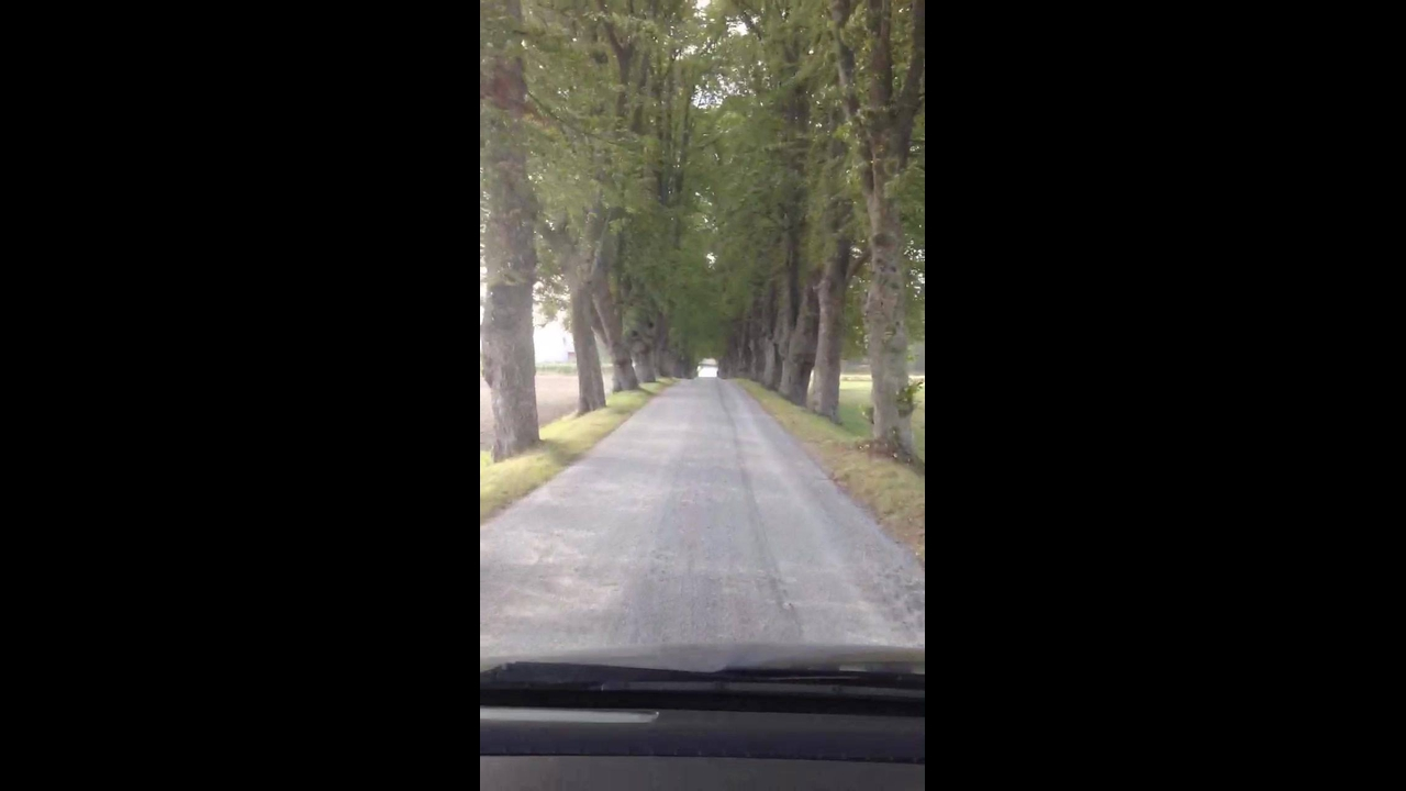 Estrada com pedaço coberto por arvores