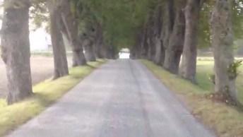 Estrada Com Pedaço Coberto Por Arvores, Veja Que Coisa Mais Linda!