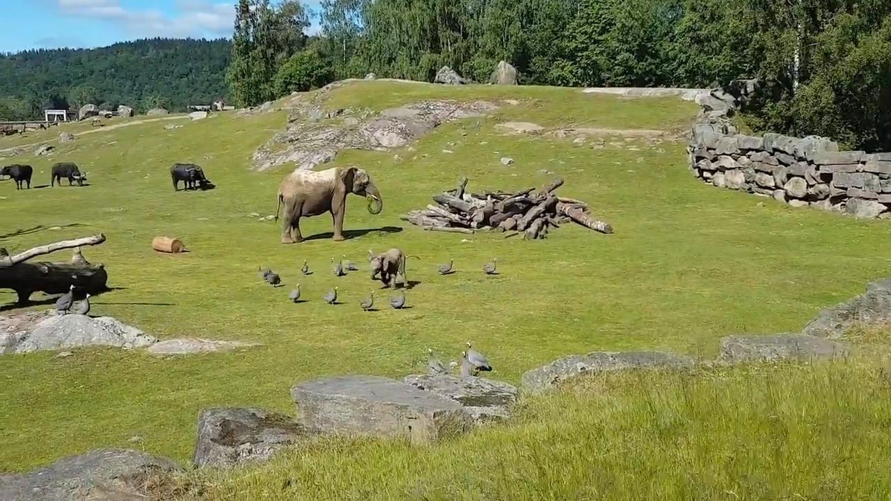 Filhotinho de elefante não da sucedo para os outros animais