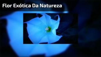 Flor Exótica Da Natureza, Parece Que É Um Cata-Vento, Mas Quando Ela Se Abre. . .