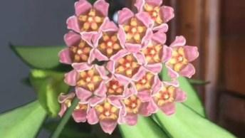 Flor Se Abrindo, Olha Só Que Cena Magnifica, A Natureza É Maravilhosa!