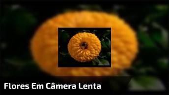 Flores Se Abrindo Em Câmera Lenta, Lindas Imagens Para Se Apreciar!