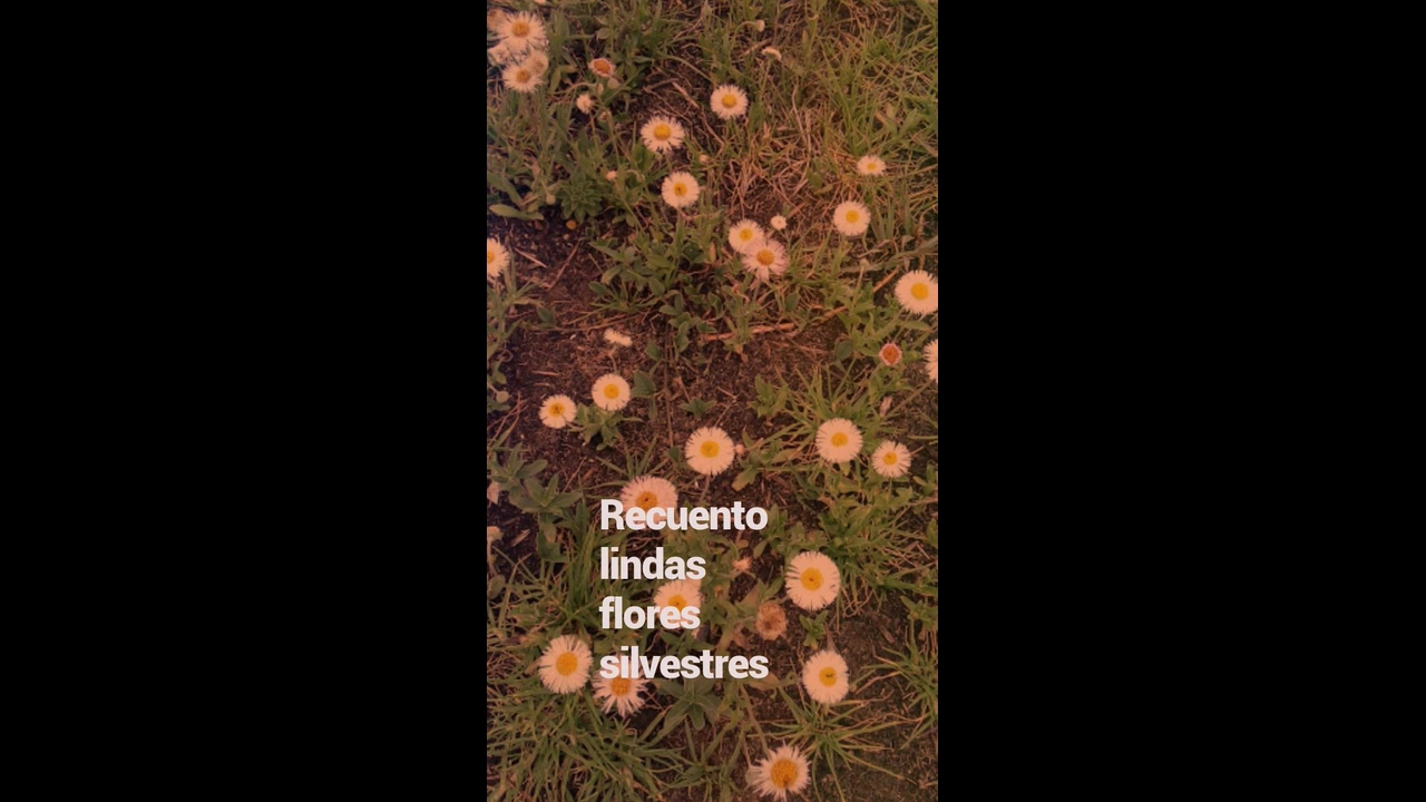 Flores Silvestres - São lindas imagens dessas flores maravilhosas